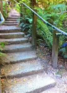 1000 steps Upper Ferntree Gully