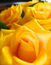Worthy of flowers