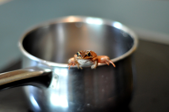 frog_in_a_pot_2