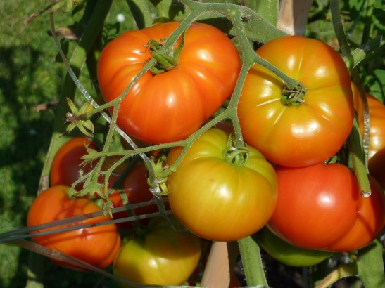 tomatoes-1320421_960_720